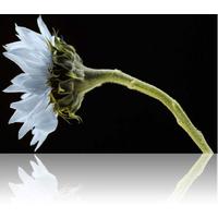 Wildflower logo