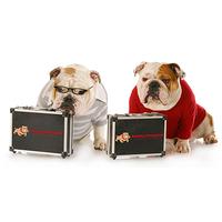 Bulldog Consulting Services logo