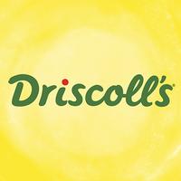 Driscoll's logo
